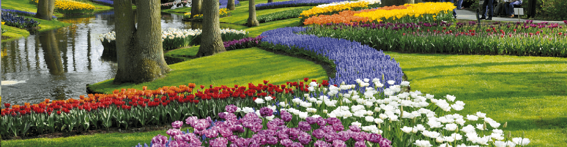 Keukenhof The Netherlands 2021 Travel to see the most spectacular garden in Europe 2021