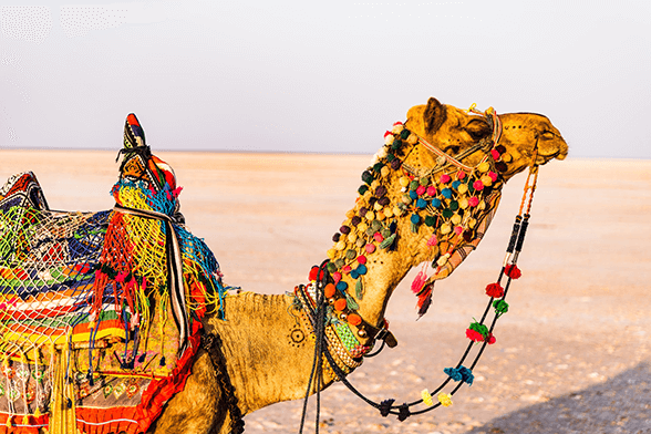 Camel Best Luxury tours to Rajasthan from the UK