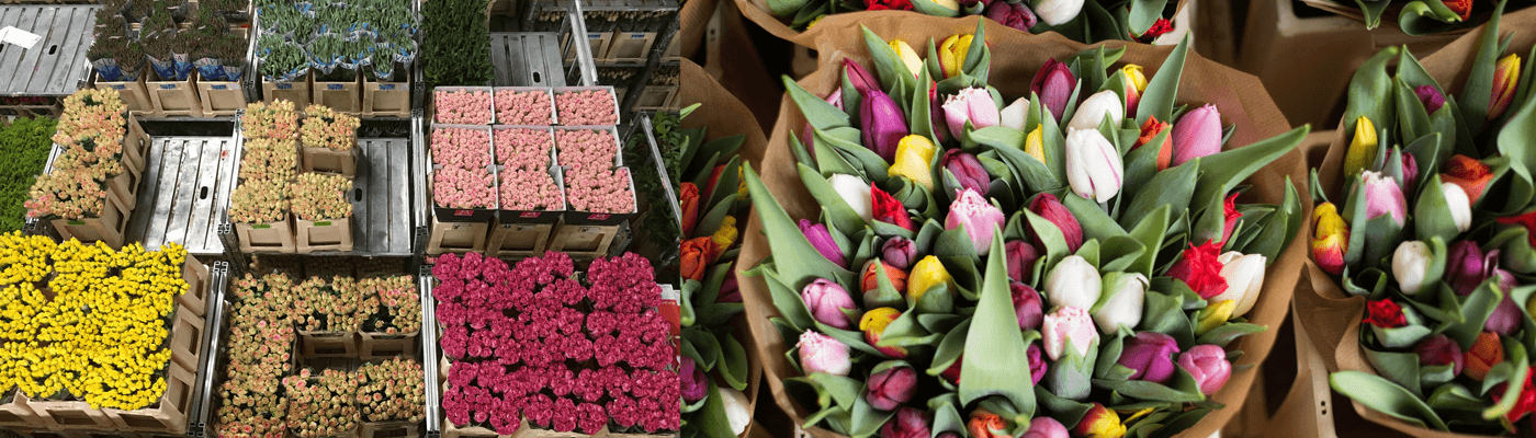 Flora Holland floral wholesalers