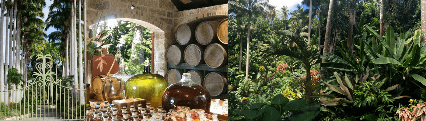 Tasting Rum on Caribbean holiday and Bontanic Garden visits in St Lucia and Barbados