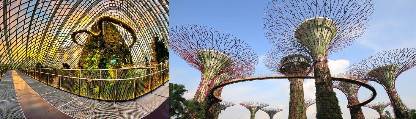 Singapore Gardens by the Bay  Super Trees