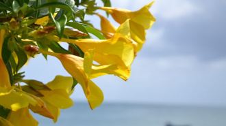 Tropical flowers  in St Lucia in March 2022 and May 2022