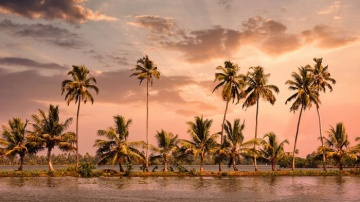 Alleppey Palm trees on the coast of Southeren India - Holidays to Kerala