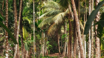 Palm Forest Best Wildllife tour to Southern India