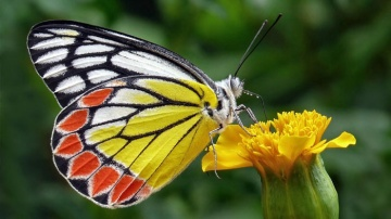Visit a butterfly garden in Mararikulam in Southern India Holiday to Kerala