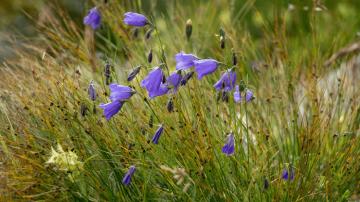 Wildflowers Mountain Landscape Alpine