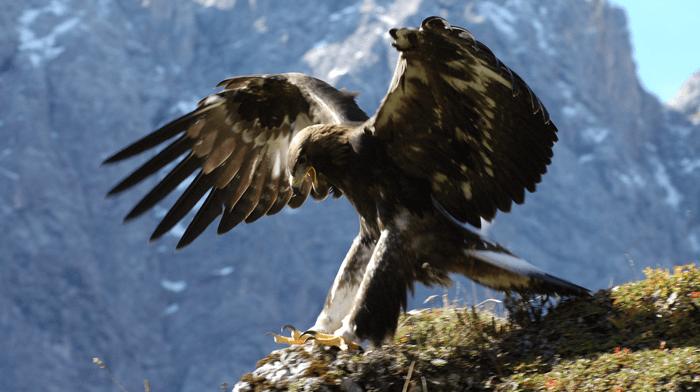 Bird watching Nature trip Summer in Austria 2022